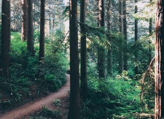 Hiking trail in woods
