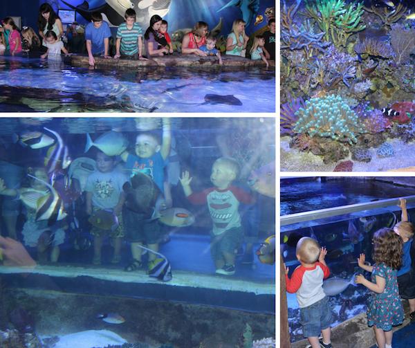 Playdate - Aquarium
