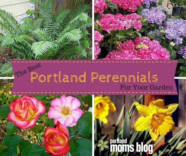 Perennials To Grow In Your Portland Flower Garden