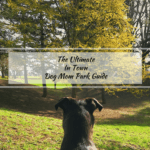 Portland's Top Four Dog Parks