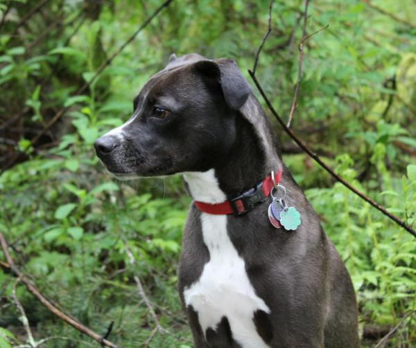 dog, outside, tyron, walk, nature, pet