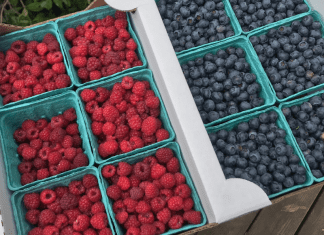 Flats of freshly picked raspberries and blueberries in pints at the farm