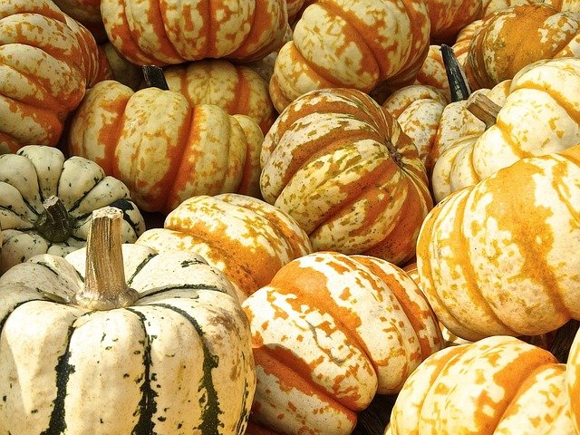 pumpkins in a pile for holidays