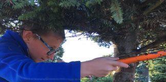 kid cutting down a christmas tree