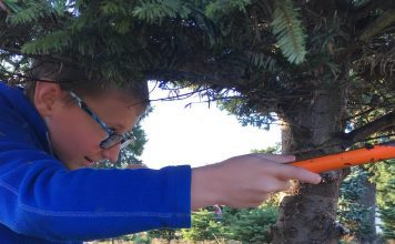 kid cutting down a christmas tree