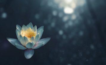 Mindful Self-Compassion - Flower