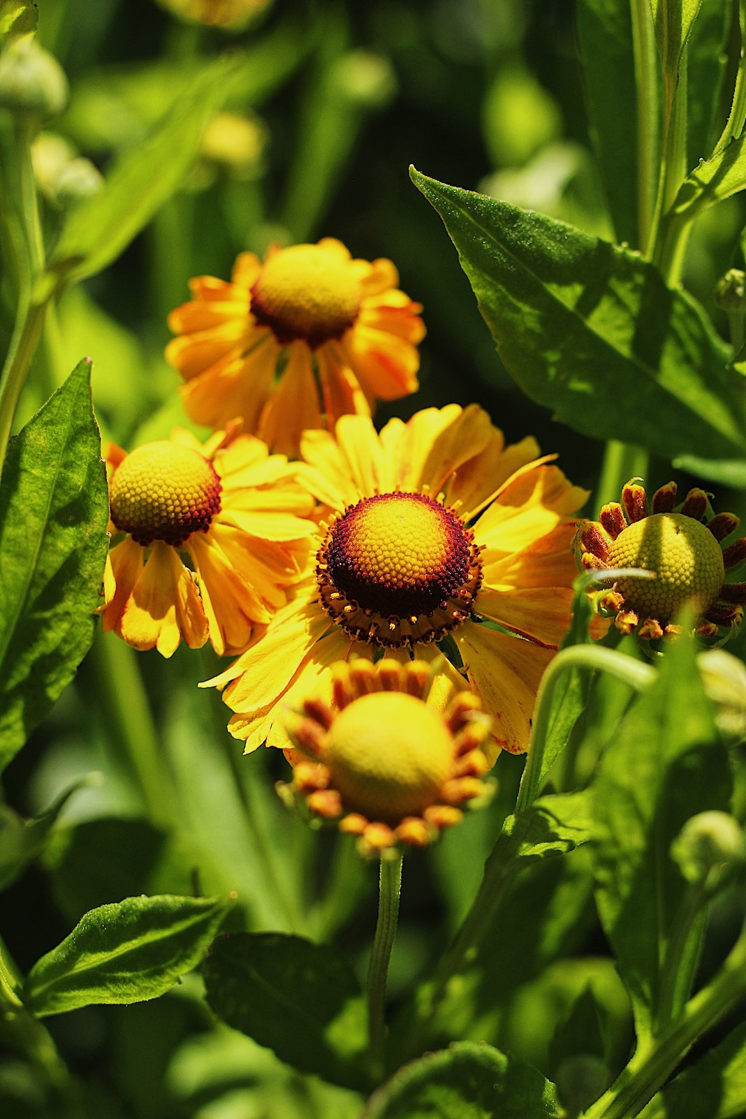 Bright yellow flowers with pollen
